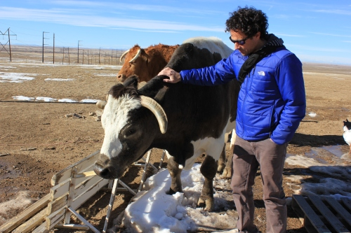 Josh meets a cow friend, Justice.