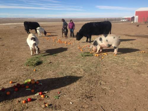 Whole Foods donates expired produce to Peaceful Prairie. The animals love it!