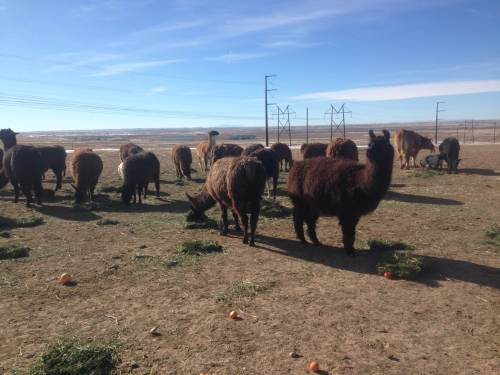 The crew at Peaceful Prairie.
