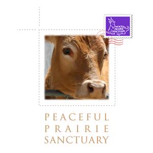 Peaceful Prairie Sanctuary